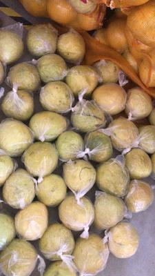 四川省成都市新都区贡水白柚 1.5斤以上