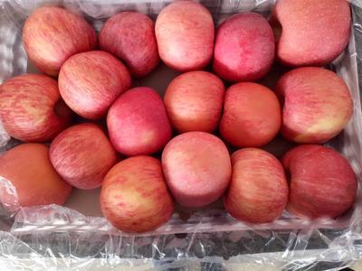这是一张关于洛川苹果 80mm以上 条红 纸袋的产品图片