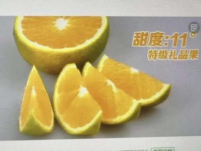 福建省南平市延平区建阳桔柚 1斤以下