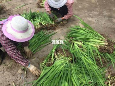 山东省济宁市微山县黄菖蒲