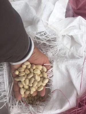 广西壮族自治区南宁市江南区开心果 24个月以上 散装