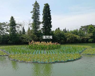 山东省济宁市微山县植物浮床 人工生态浮岛