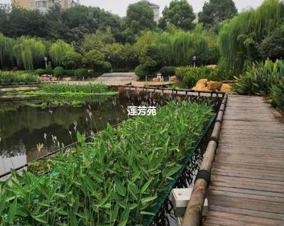 山东省济宁市微山县人工浮床 人工生态浮床批发厂家
