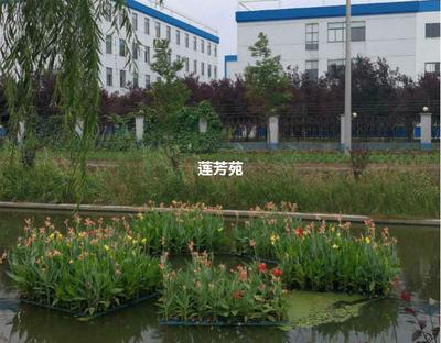 山东省济宁市微山县人工浮岛 生态浮床 厂家批发