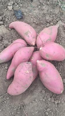 这是一张关于烟薯25 6两~1斤 红皮的产品图片