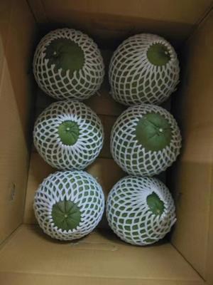 云南省西双版纳傣族自治州景洪市泰国红宝石柚 1.5斤以上