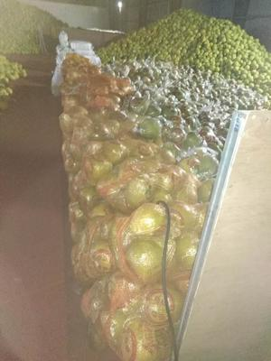 广东省梅州市梅县区沙田柚 2斤以上