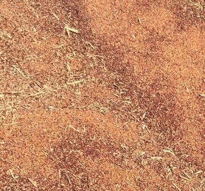 这是一张关于红高粱 霉变 ≤1% 2等品的产品图片