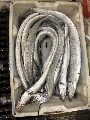 福建省南平市松溪县舟山带鱼 0.5公斤以下 野生