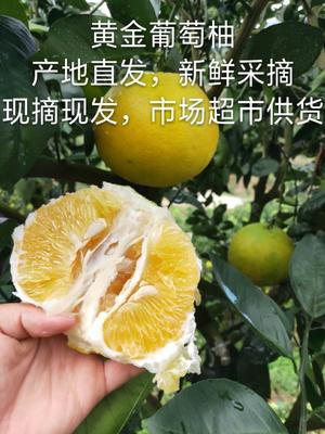 福建省漳州市平和县葡萄柚 1斤以上