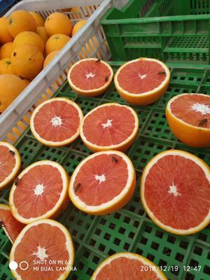 这是一张关于赣南血橙 4-8两 70-75mm的产品图片