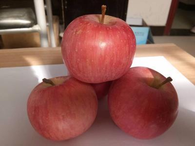 山东省日照市东港区红富士苹果 80mm以上 片红 膜袋 null