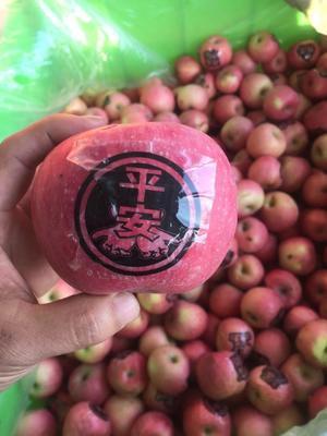 山东省临沂市沂水县红富士苹果 70mm以上 统货 纸+膜袋