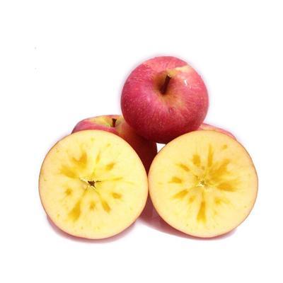 四川省成都市彭州市阿克苏冰糖心苹果 70mm以上 片红 纸+膜袋