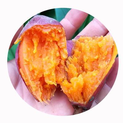 这是一张关于西瓜红 红皮 3两~6两的产品图片