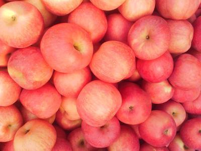 山东省日照市东港区红富士苹果