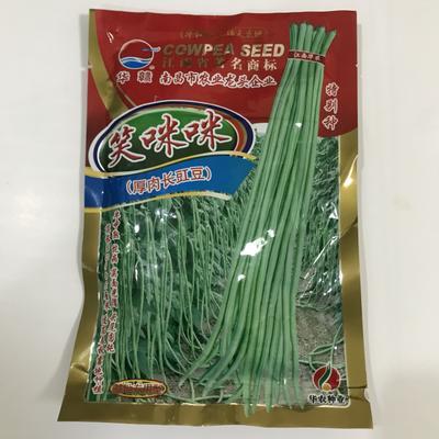 山东省临沂市兰山区油青豆角种子