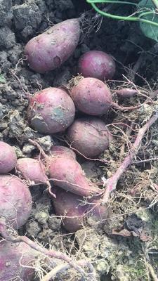 广西壮族自治区南宁市西乡塘区越南紫薯 3两以下