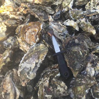 山东省烟台市海阳市太平洋牡蛎 2-3两/只 人工殖养