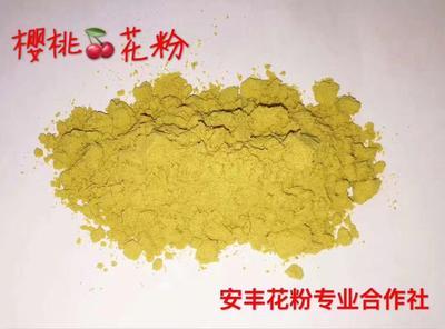 山西省运城市平陆县樱桃花粉