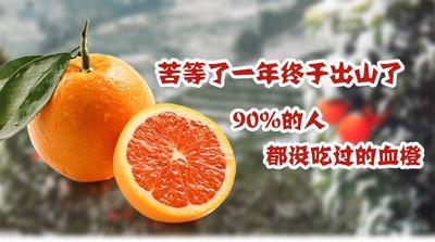 重庆万州区血橙 55 - 60mm 4两以下
