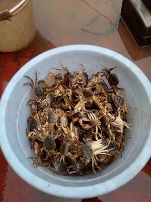 重庆万州区高平河蟹 2.0两以下 统货