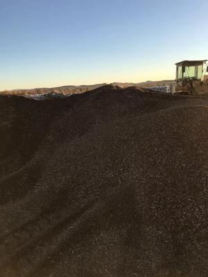 内蒙古自治区兴安盟乌兰浩特市油葵