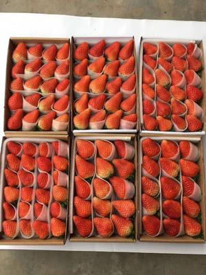 江苏省徐州市贾汪区双流冬草莓 烘焙专用草莓