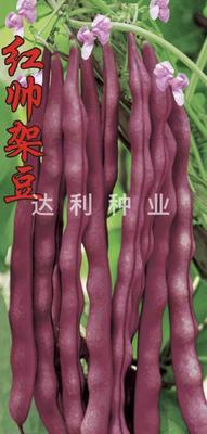 四川省成都市金牛区红架豆豆角种子 ≥99%