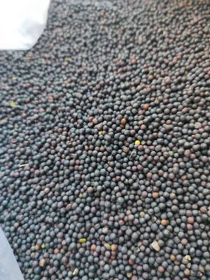 内蒙古自治区呼伦贝尔市鄂伦春自治旗油菜籽种子 亲本 ≥97% ≥80% ≥98% ≤9%