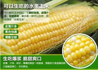 广西壮族自治区南宁市上林县水果玉米