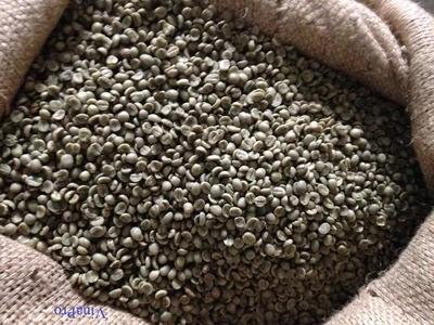 云南省西双版纳傣族自治州勐海县老挝咖啡豆