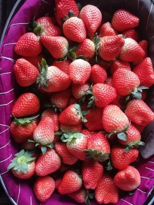 江苏省徐州市贾汪区宁玉草莓