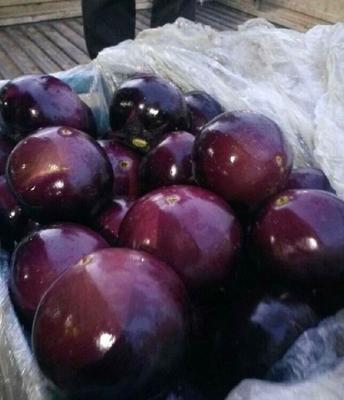这是一张关于黑圆茄 混装通货 圆茄 10年紫光圆茄子代办的产品图片