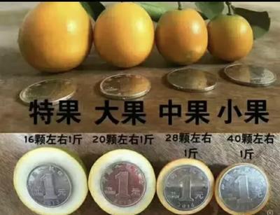 广西壮族自治区柳州市融安县脆皮金桔