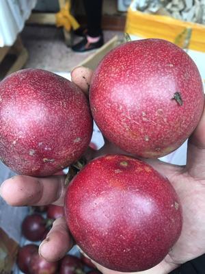 这是一张关于台农一号百香果 70 - 80克 的产品图片