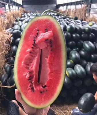 广西壮族自治区南宁市西乡塘区黑美人西瓜 1茬 10成熟 有籽 5斤打底
