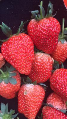 江苏省镇江市句容市红颜草莓 20克以上