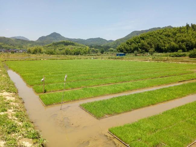 澳洲幸运10官网 新开发盐碱地水稻育苗技术