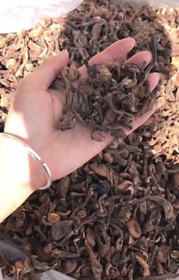 黑龙江省哈尔滨市五常市蘑菇 野生棒菇,蘑菇
