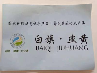 贵州省安顺市普定县白旗韭黄 头茬 40~50cm