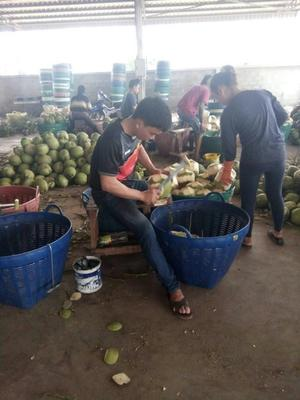 云南省西双版纳傣族自治州勐海县泰国椰青 1.5 - 2斤