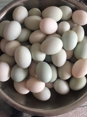 安徽省六安市裕安区青皮鸭蛋 食用 箱装