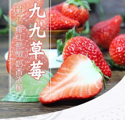 丹东草莓 40克以上