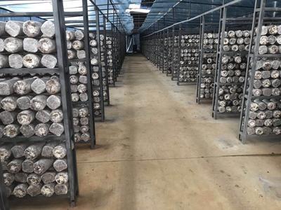 广西壮族自治区南宁市横县蘑菇
