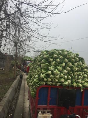 四川省绵阳市安县青菜泡菜