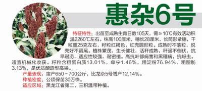 黑龙江省哈尔滨市道里区惠杂6号高粱种子 杂交种 ≥80%