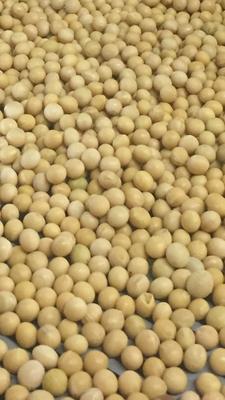 黑龙江省齐齐哈尔市讷河市黄大豆 生大豆 2等品