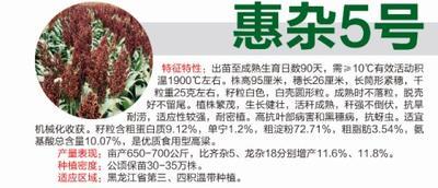 黑龙江省哈尔滨市道里区惠杂5号高粱种子 杂交种 ≥80%
