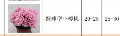 江苏省常州市新北区东鹃 0.5米以下